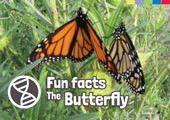 Fun Facts: The Butterfly